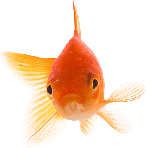 fish prime
